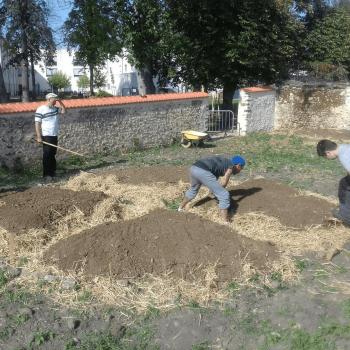 plantations-jardin-chapoton